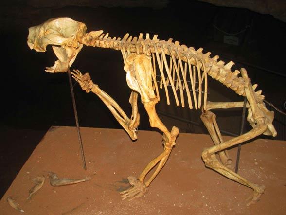 Lew workowaty (Thylacoleo carnifex).