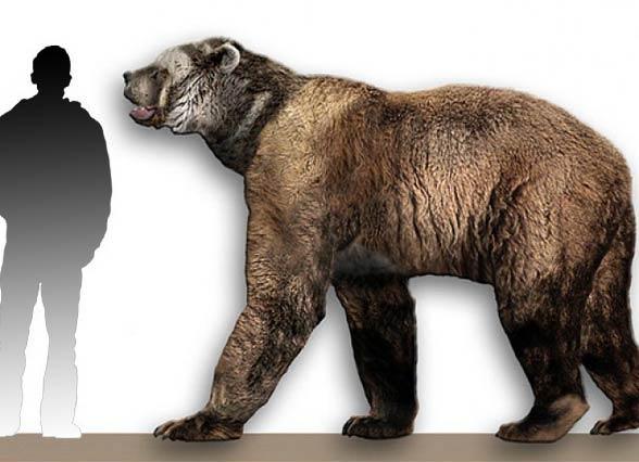 Niedźwiedź krótkopyski (Arctodus simus)