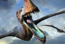 Photo of Największe pterozaury Top10