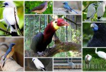 Photo of Najbardziej zagrożone gatunki ptaków – TOP10