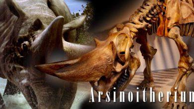 Photo of Arsinoiterium (Arsinoitherium)
