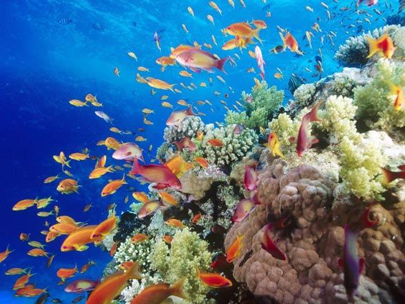 Koralowce w Wielkiej Rafie Koralowej.