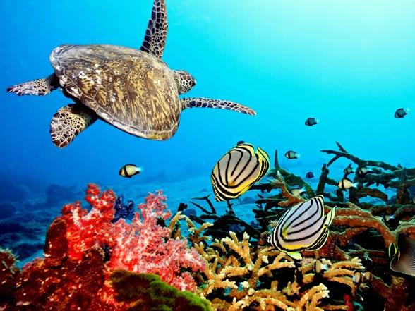 Rafa koralowa.