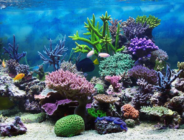 Koralowce (Anthozoa)