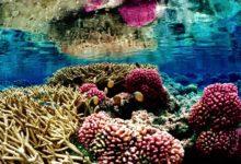 Photo of Koralowce (Anthozoa)