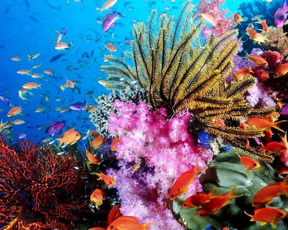 Koralowce (Anthozoa).