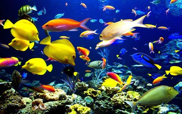 Rafy koralowe są jednymi z najbogatszych ekosystemów świata