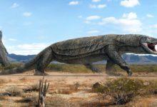 Photo of Megalania – gigantyczny jaszczur z Australii