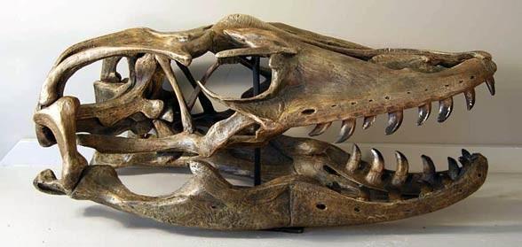 Megalania (Varanus priscus / Megalania prisca)