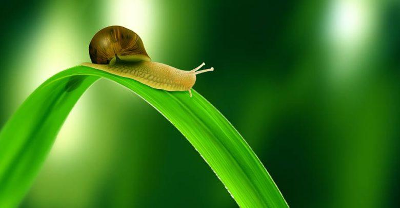 Photo of Królestwo zwierząt – Mięczaki (Mollusca)