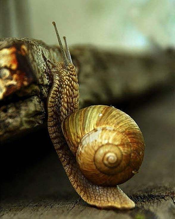 Mięczaki (Mollusca)