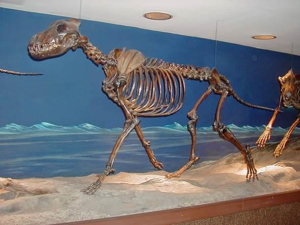 Wilk straszny (Canis dirus).