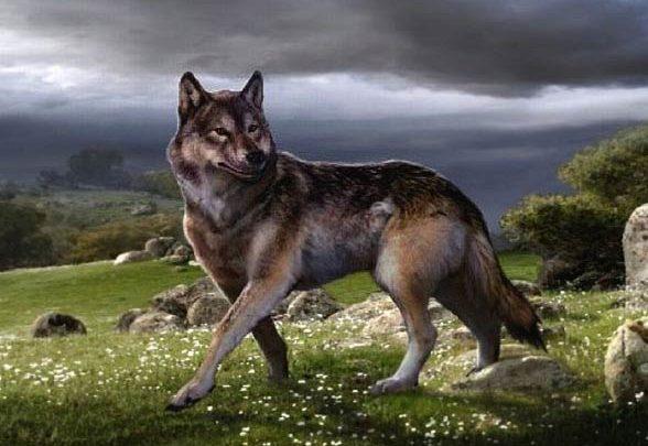 Photo of Wilk straszny (Canis dirus)