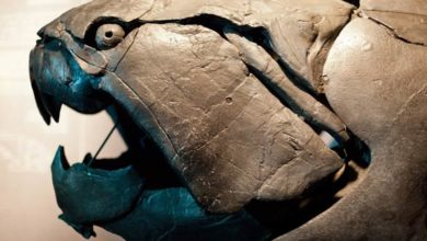 Photo of Dunkleosteus – prehistoryczny król oceanów
