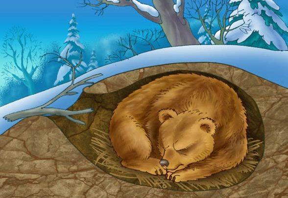 Photo of Sen zimowy i letni zwierząt, hibernacja, estywacja, torpor
