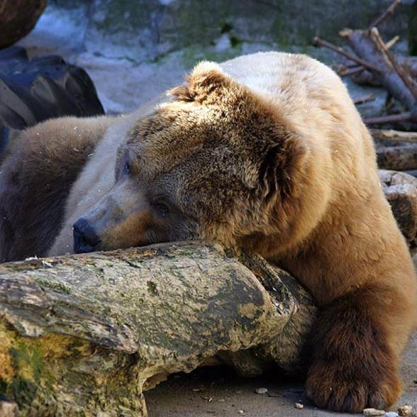 Hibernacja zwierząt
