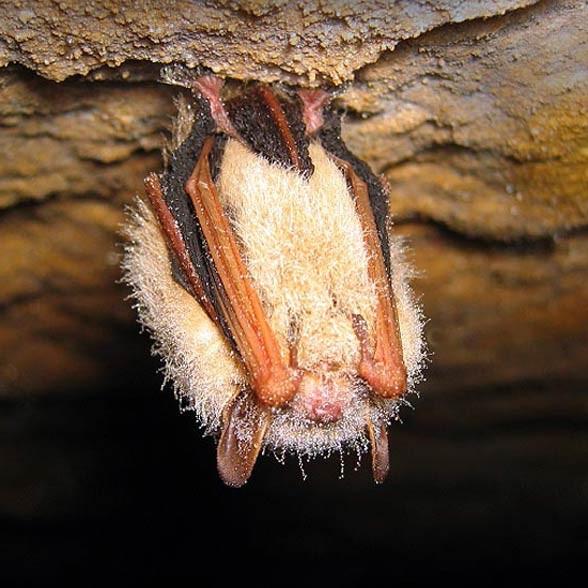 wiele gatunków nietoperzy co noc zapada w stan torporu