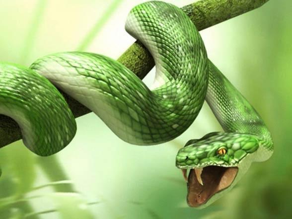 Jad węży