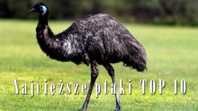 Photo of Najcięższe ptaki – Top 10