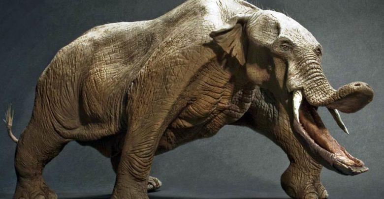 Photo of Platybelodon – słoń bez trąby
