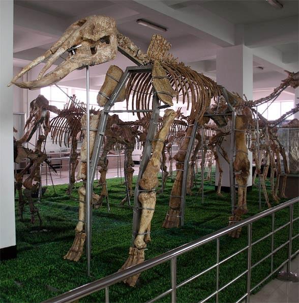 Platybelodon