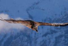 Photo of Najwyżej latające ptaki – Top10