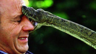 Photo of Ukąszenia węży