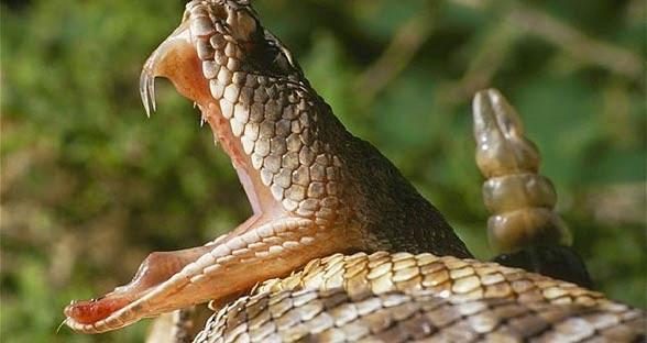 Ukąszenia węży