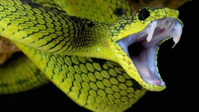 Photo of Najbardziej niebezpieczne węże świata