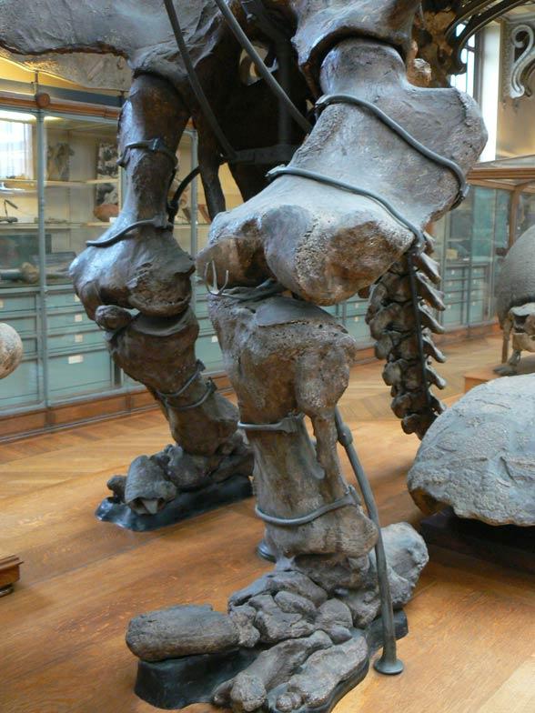 Megaterium (Megatherium)