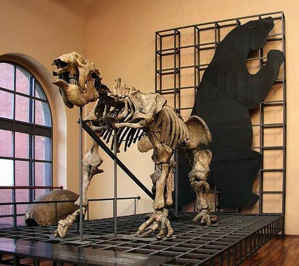 Megaterium (Megatherium).