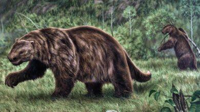 Photo of Megaterium (Megatherium) – leniwiec wielkości słonia