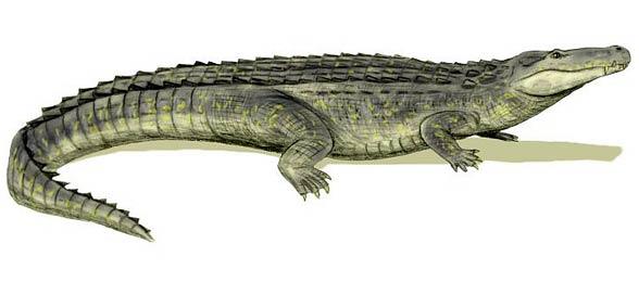 Purussaurus For Pinter...