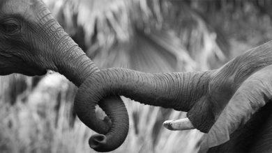 Photo of Seksualne zachowania zwierząt