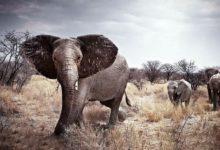 Photo of Najcięższe zwierzęta lądowe – Top 20