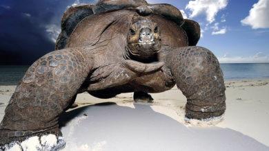 Photo of Największe żółwie świata – Top 10
