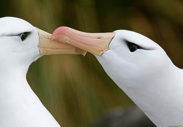 Zachowania seksualne zwierząt