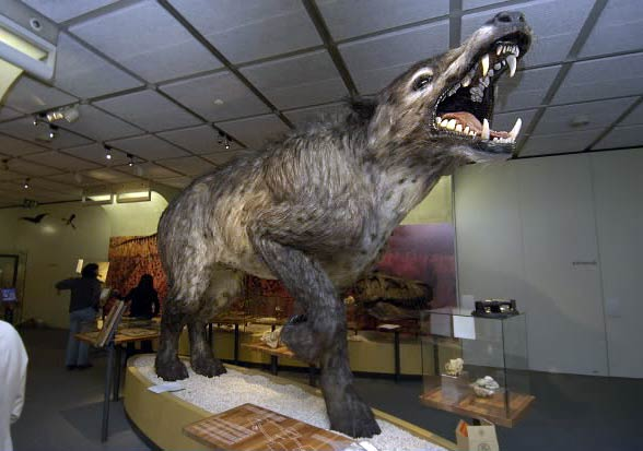 Andrewsarchus (Andrewsarchus mongoliensis).