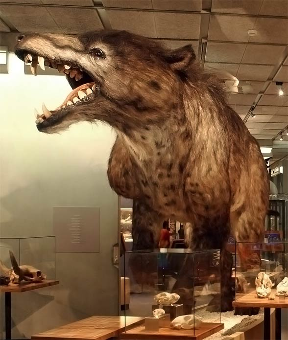 Andrewsarchus (Andrewsarchus mongoliensis)