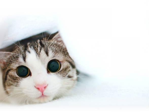Inteligencja kotów
