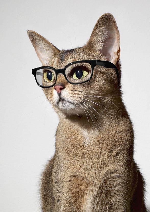 Inteligencja kotów | DinoAnimals.pl