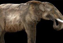 Photo of Mastodont