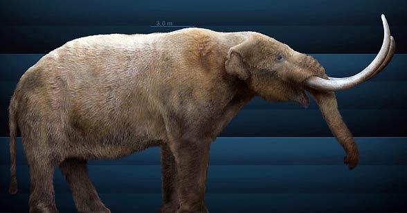 Mastodont amerykański (†Mammut americanum)
