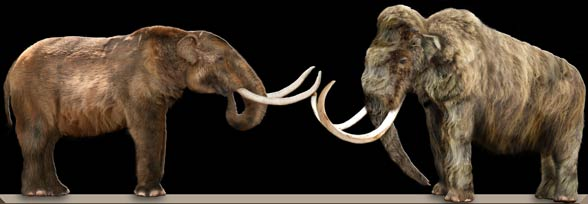 Mastodont i mamut