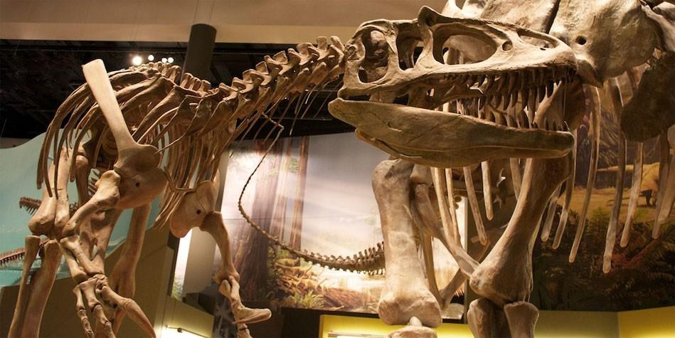 Dinoanimals Pl: Zaurofaganaks (Saurophaganax)