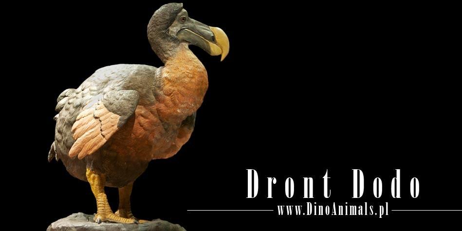 Dinoanimals Pl: Dront Dodo (Raphus Cucullatus)