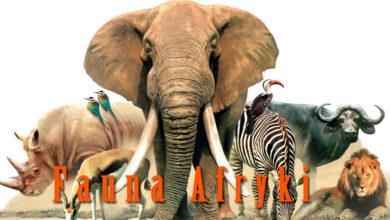 Photo of Fauna Afryki / Zwierzęta Afryki