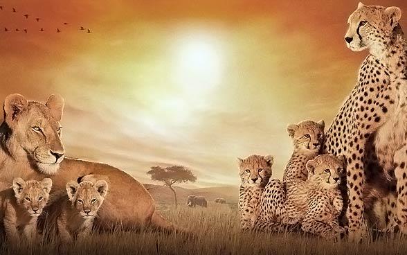 Fauna Afryki