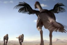 Photo of Gigantoraptor (Gigantoraptor erlianensis)