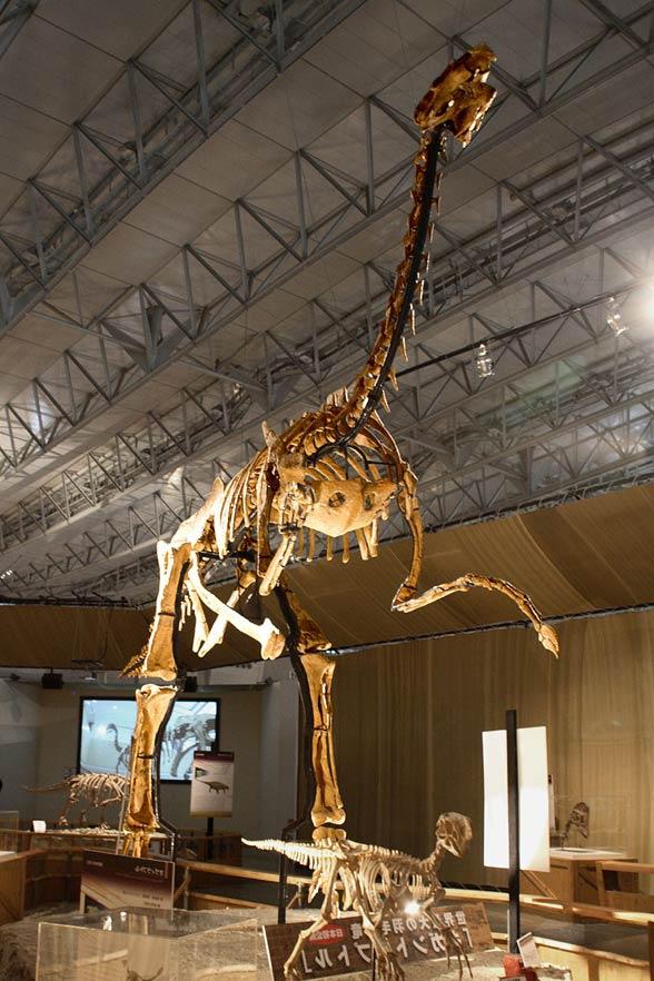 Gigantoraptor (Gigantoraptor erlianensis)